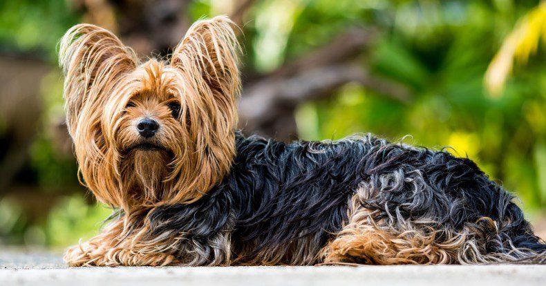 חיסוני כלבת בגונן: יום שלישי 16.5.17