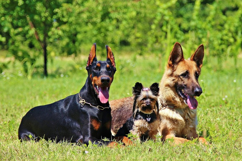 כלבים, כלבים, כלבים…