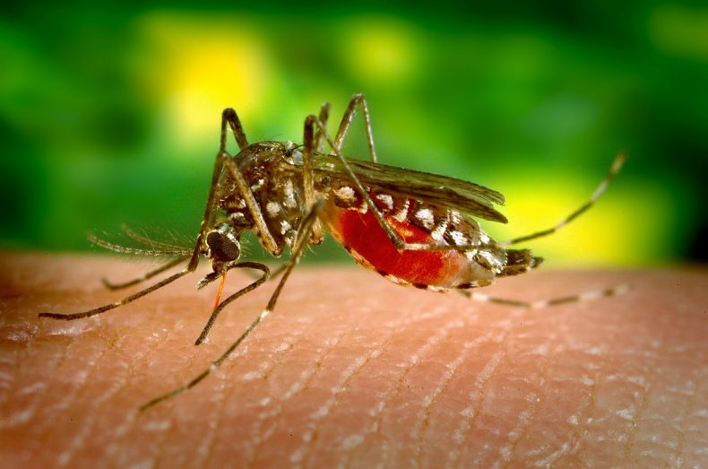 מניעת יתושים בישובים