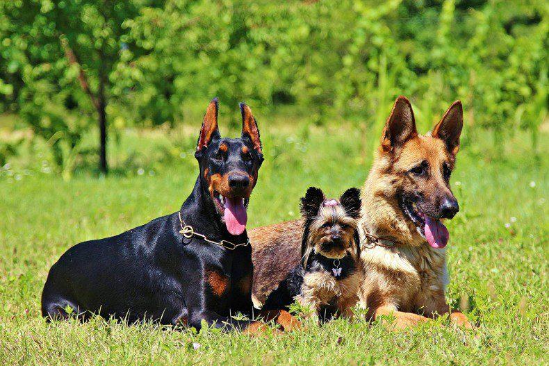 מצב הכלבת באזורנו – סתיו 2016