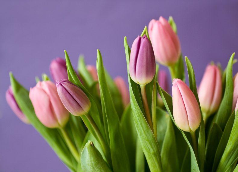אורית לשם אביב: מכתב לקהילת גונן – כניסה לתפקיד מנהלת רווחה ובריאות